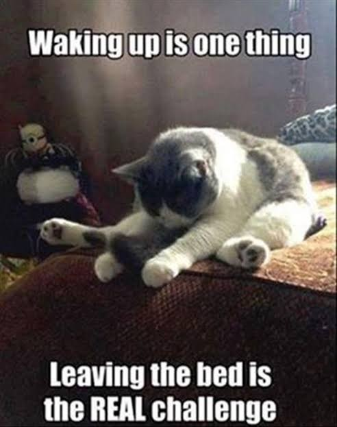 leaving the bed is the real challenge.