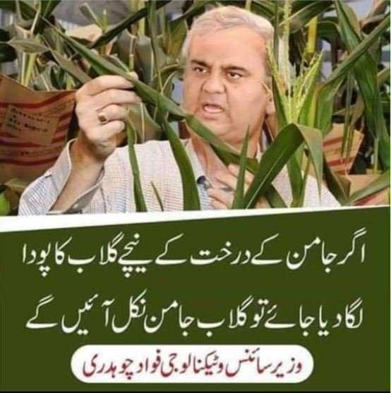 Gulab Jaman Recipe