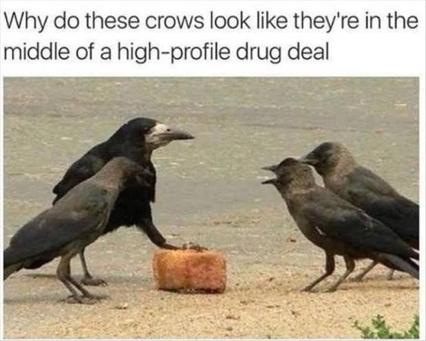 crows drug deal