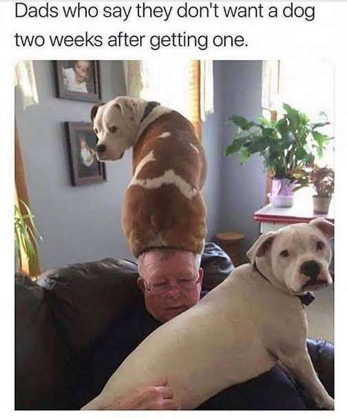 Dads and dog relationship.